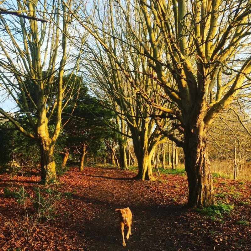 Best Walks in Oxfordshire