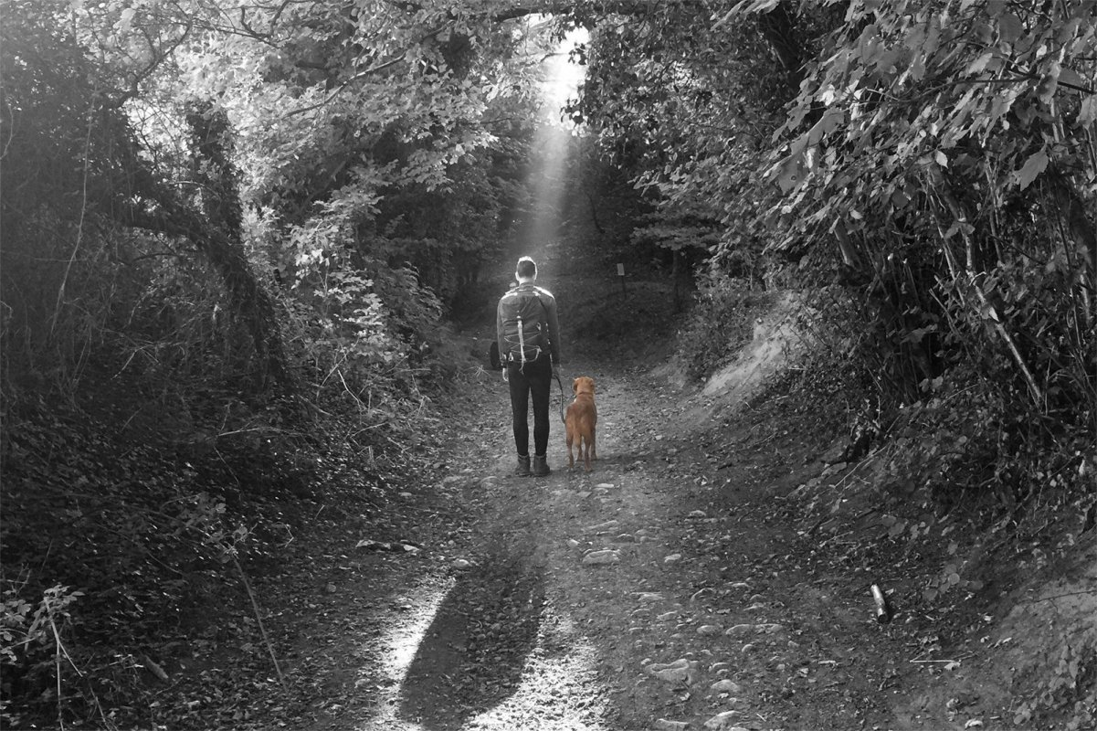 Dog Walks in Oxfordshire