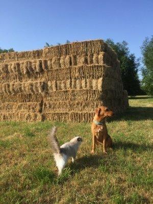 Wildflower Meadow - the hay