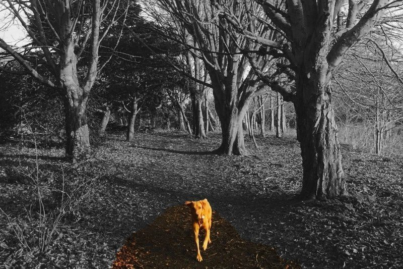 More walks in oxfordshire